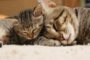 猫保険、猫病院、猫疾患