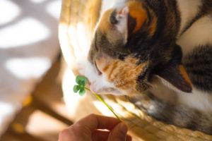 猫、手元供養、ペット手元供養