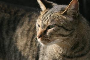 猫、愛猫、猫死んだら