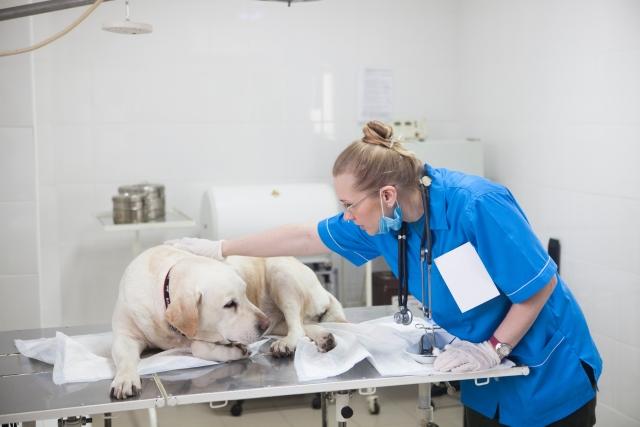 動物病院、獣医、犬病院