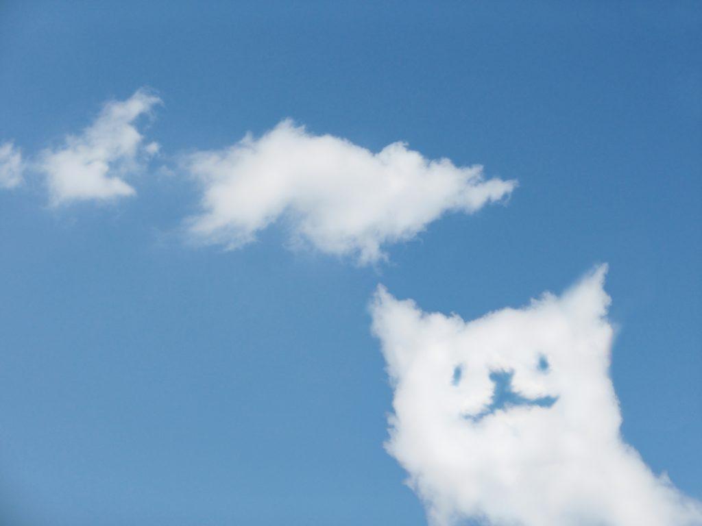 猫、空、猫旅立ち