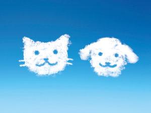 ペット、空、ペット旅立ち