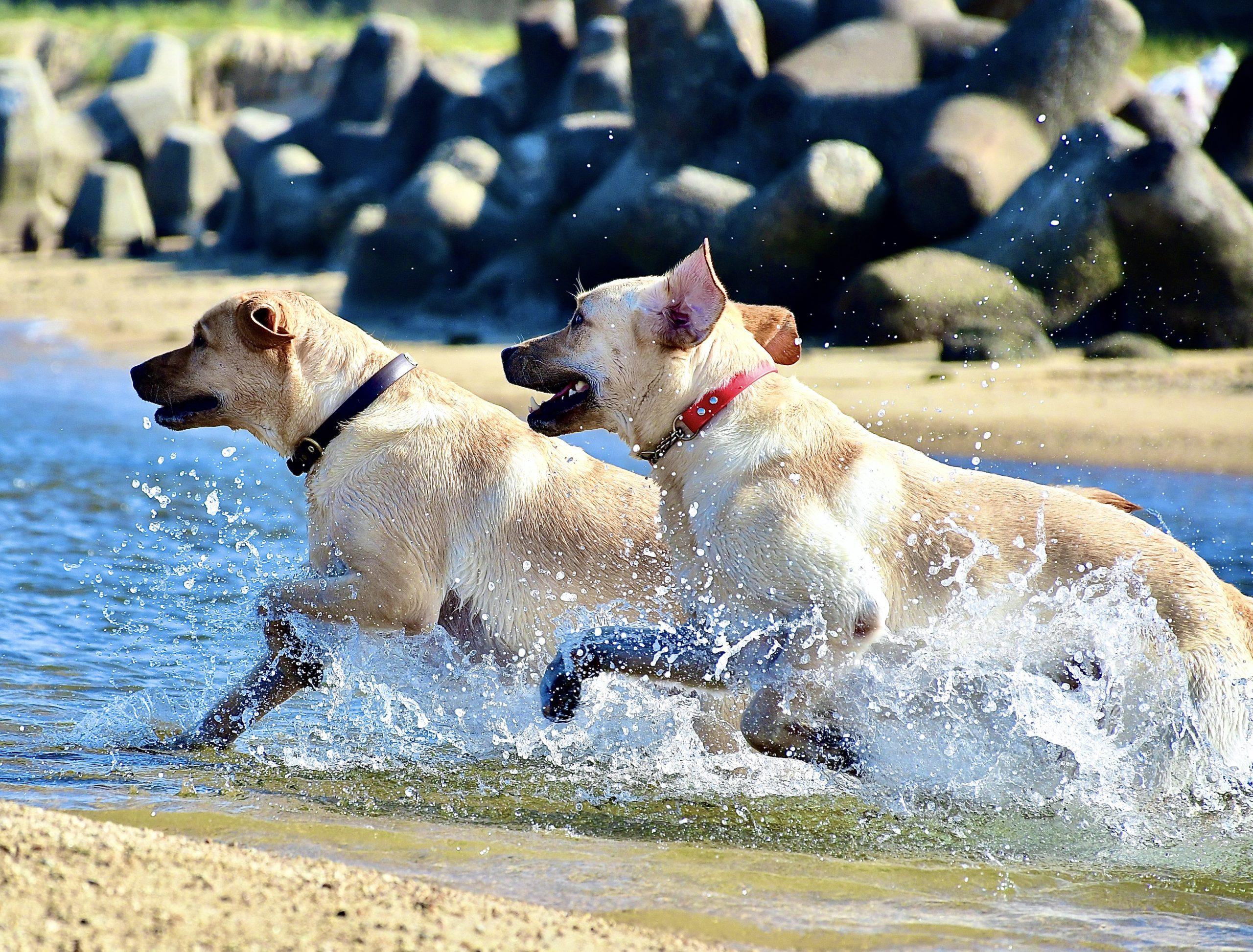 犬海洋散骨、海洋散骨、犬海、ゴールデンレトリーバー