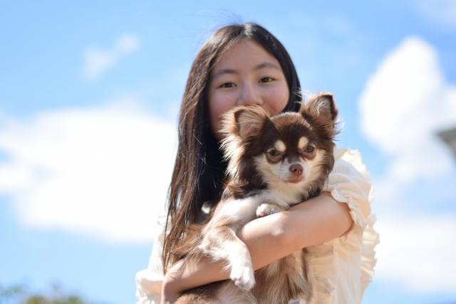 チワワ、小型犬、飼い主
