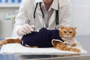 猫、病気、動物病院