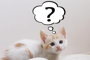 猫、子猫、疑問
