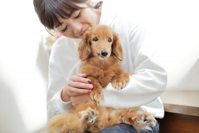 ダックスフンド、小型犬、犬