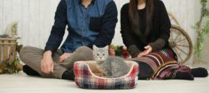 猫、飼い主、子猫