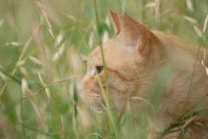 猫、雑種、野良猫