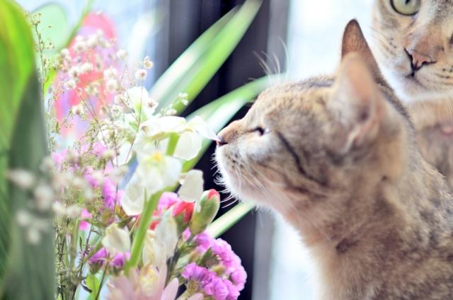 猫、花、子猫、雑種