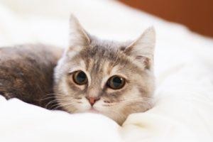猫、子猫、猫火葬、猫葬儀