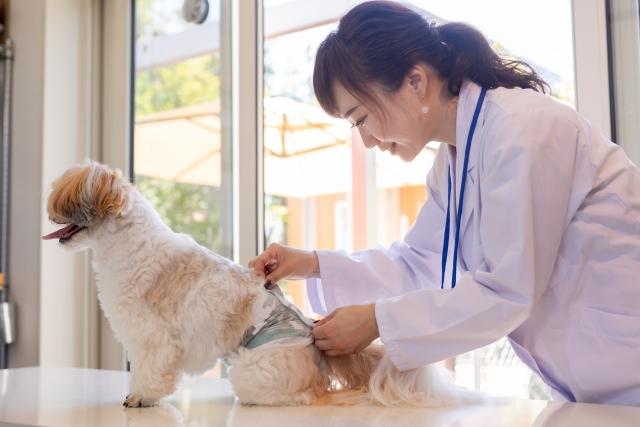 老犬、シーズー、老犬ホーム、ペット介護
