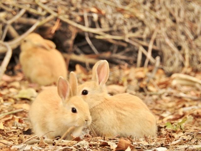 うさぎ、小動物、小動物保険