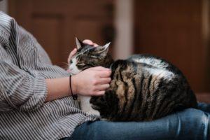 猫が亡くなったら、猫、猫火葬
