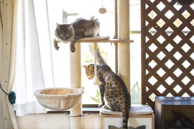 猫、キャットタワー