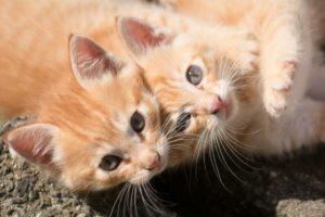 猫、猫火葬、子猫