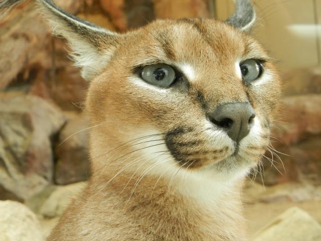 猫、猫火葬、特定動物