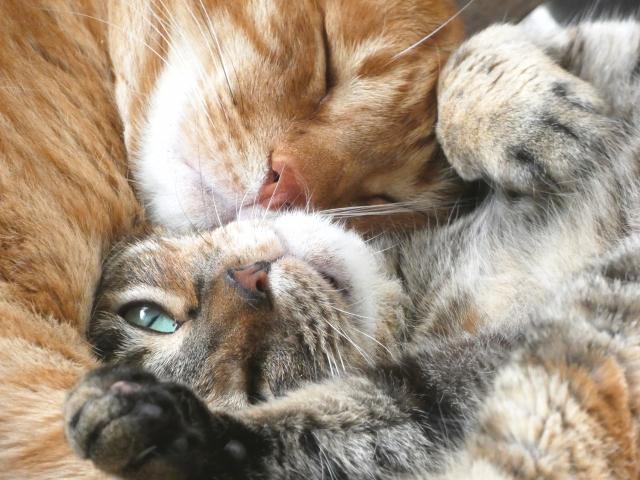 猫、猫火葬