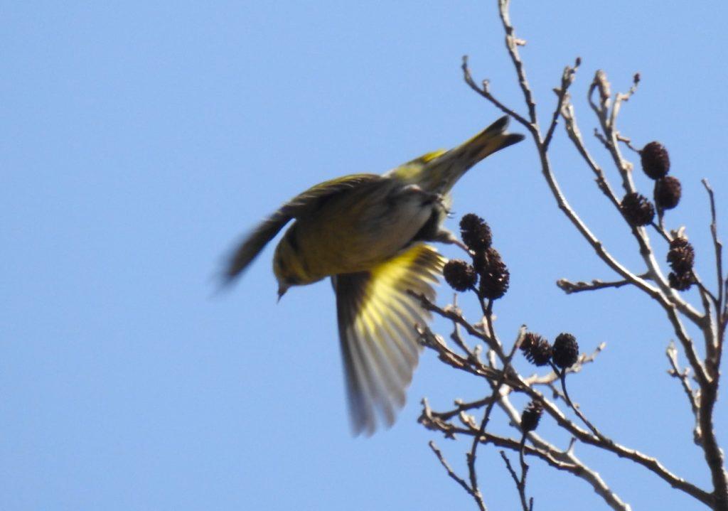 野鳥、鳥、小鳥