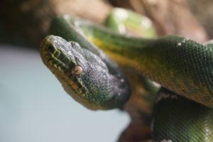 爬虫類、蛇