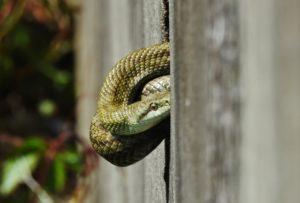 蛇、爬虫類