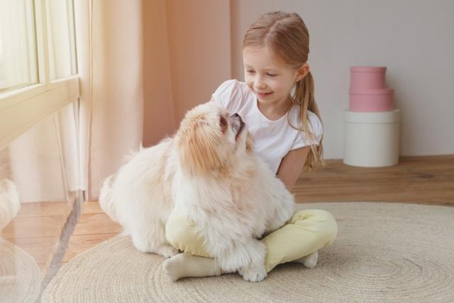 シーズー、中型犬、犬