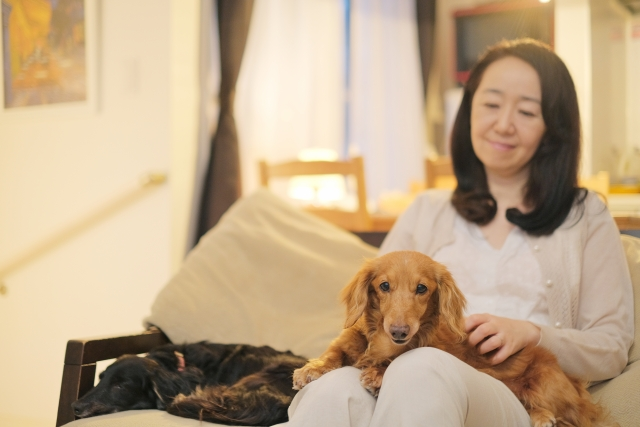 ダックスフンド、犬、小型犬