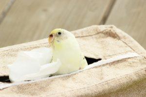 インコ、小鳥