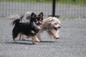 犬、小型犬