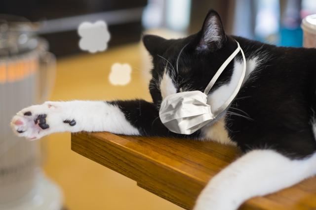 猫、コロナウイルス