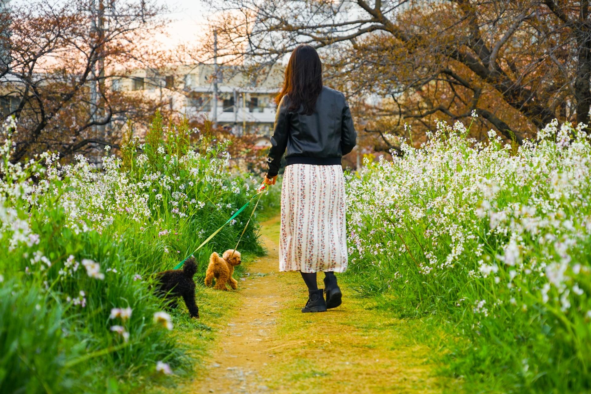 世田谷区、犬
